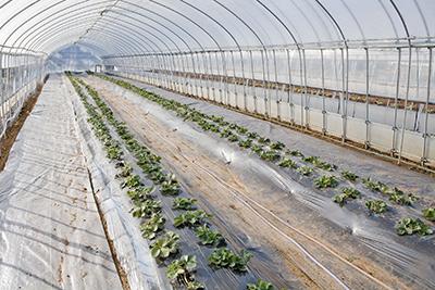 農業管理システム